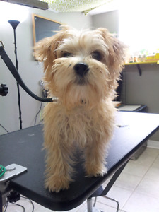 Welcome to Yuppy Puppy Pet Grooming Spa