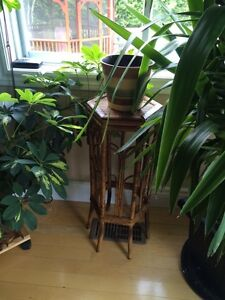 Plant table bamboo
