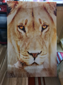 Lion print on plexi-glass