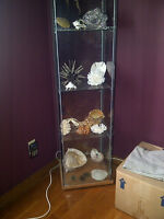 Quality Shell and Coral Collection