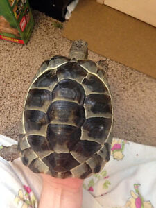 Looking for a new home for my tortoise