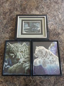 Framed 8 x 10 White Tiger Pictures