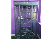 Bird cage complete with 3 budgerigars