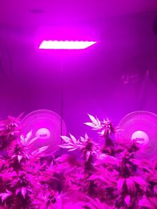 1000W 1200W LED Grow Light Hydroponic High Yield & Double Chips