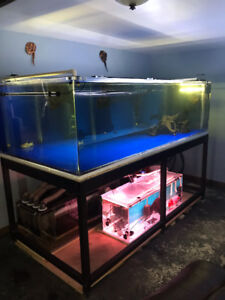 Monster fish tank for sale or trade for something fun