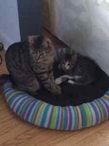 Kitten for sale!!!