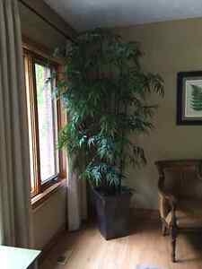 """Bamboo tree.  Excellent quality. 8'5"""""""