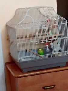 2 Parakeets (budgies) Need a New Home | Cage Included