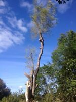 Tree & limb removal, lot clearing, chipping insured.