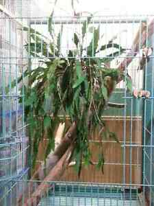 LARGE PET BIRD CAGE PARROT SECOND HAND