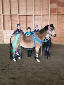 Host an Equine First Aid Course for FREE.