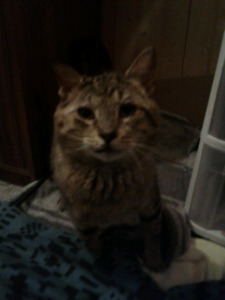 Looking for forever home for loving cat