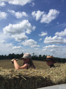 Wanted - square bales of horse hay
