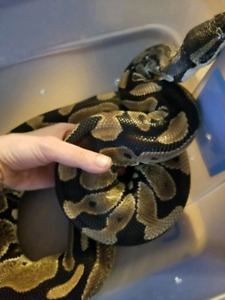 Loving home for reptiles