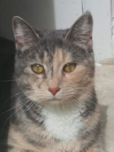 Looking to rehome our sweet 1 year old kitten