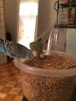Gardienne, pension oiseaux