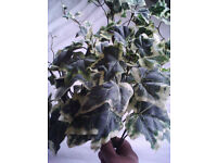 4 assorted artificial trailing ivy plants