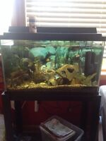 25 gal African cichlid tank + everything