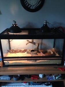 Trying to re-home my reptiles