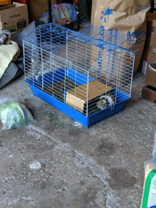 2 Guinea Pigs with a cage
