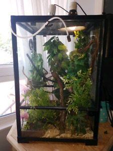 Veiled Chameleon and enclosure. Terrarium. Everything you need