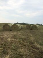 Quality 2015 Hay For Sale