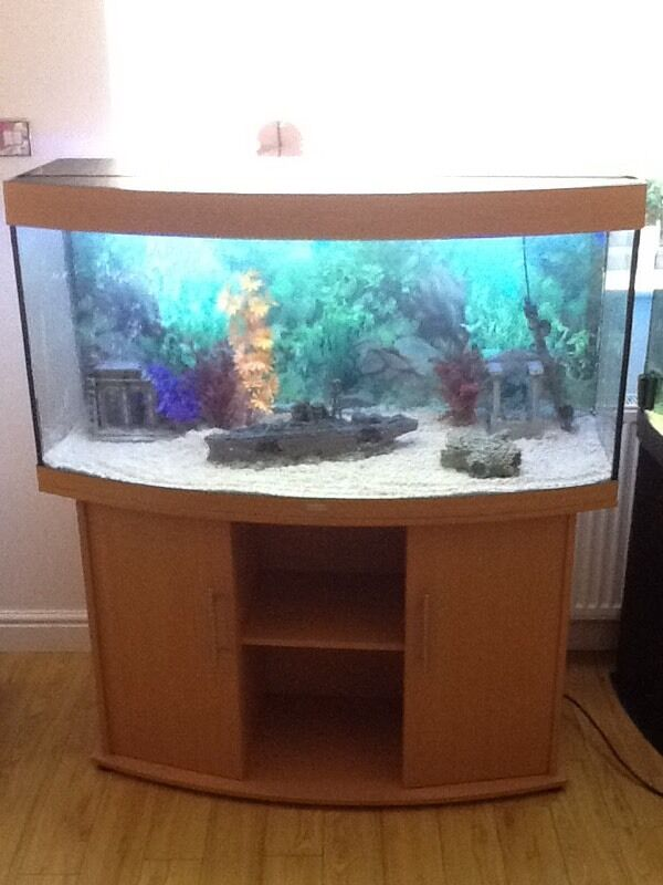 Juwel Vision 260L Tropical Fish Tank Setup w External Filterin Morpeth, NorthumberlandGumtree - Juwel Vision 260 Full SetupComes with all of the below Juwel Vision 260L TankJuwel Vision Fitted StandOriginal Working Light UnitFluval 305 External FilterTropical Heater Decorative Background Sand Decorations not included