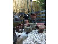 Garden pots, trellis, ornament etc from £8