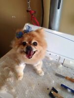Part time groomer with great September specials