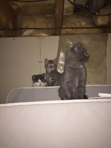 2 Free kittens looking for homes
