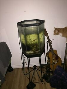 20 gallon hex tank for sale