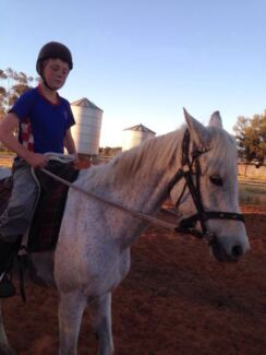 Purebred Arab mare not registered  Blighty Conargo Area Preview