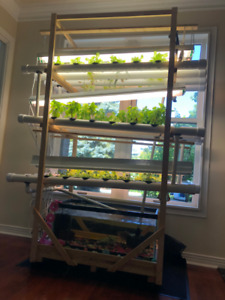 Aquaponic- fully organic-indoor Garden