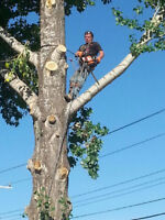 ECONOMY TREE SERVICES - Removals and Pruning