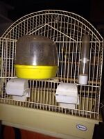 Two male canaries and cages