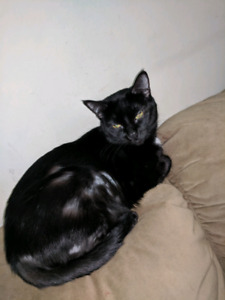 Female cat for rehoming ASAP