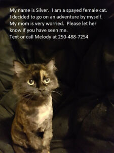 Missing cat in the Valleyview area
