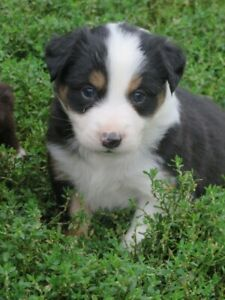 Adopt Dogs & Puppies Locally in Peterborough | Pets | Kijiji