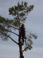 Tree Removals/Pruning Fully Insured Aborist 25 Years Experience