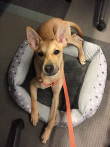 Active 8 months puppy for adoption!