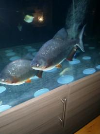 FREE fish