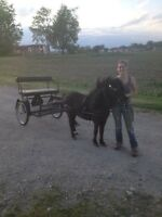 Pony cart and harness