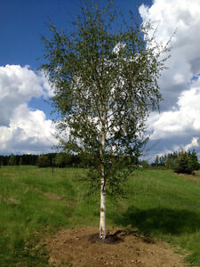 Wholesale Trees Supplied and Planted