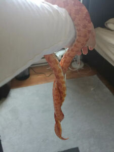 New home for pet snake