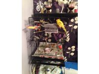 Kakariki Bird with cage and other thing