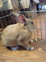 Medium size bunny, active and friendly :)