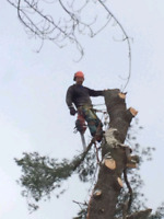 Expert Profesional Tree Removal and cutting