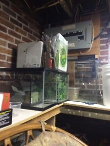 Looking for reptiles and accessories!! Peterborough Peterborough Area image 5