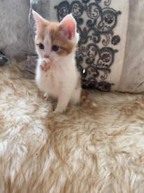 Lovely kittens ( all sold now)