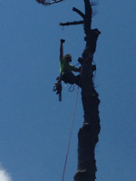 Tree Trimmers/Climbers Wanted